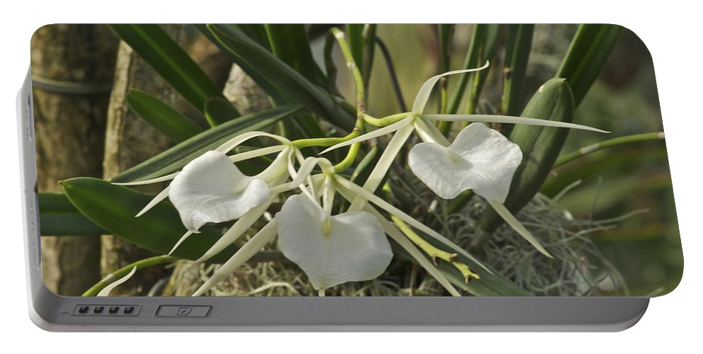 Flower Portable Battery Charger featuring the photograph White Orchids by Michael Peychich