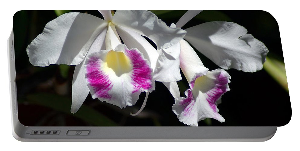 Photography Portable Battery Charger featuring the photograph White Orchids by Susanne Van Hulst