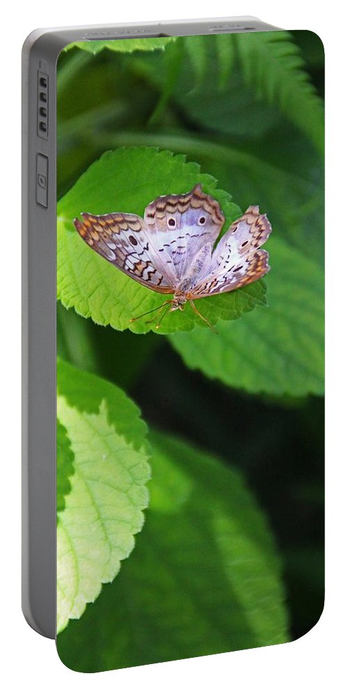 White Peacock Portable Battery Charger featuring the photograph White Peacock Butterfly II by Michiale Schneider