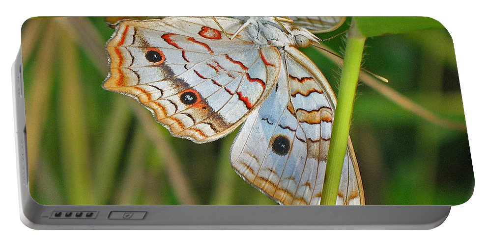 Butterfly Portable Battery Charger featuring the photograph White Peacock Butterfly by Kenneth Albin