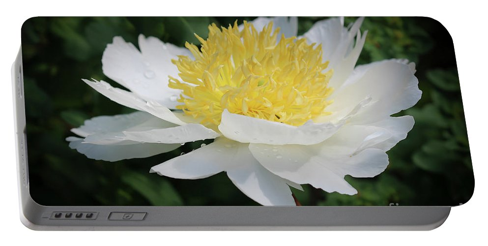 Center Portable Battery Charger featuring the photograph White Peony by Stephen Bloedow