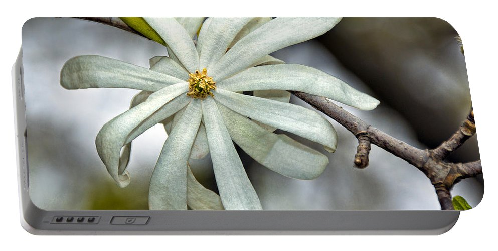 Blossom Portable Battery Charger featuring the photograph White Petals by Christopher Holmes
