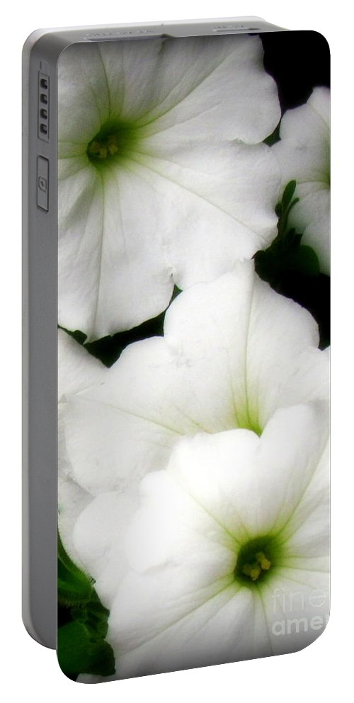 White Petunias Photographed In Montrose Portable Battery Charger featuring the photograph White Petunias 2 by Krista Carofano
