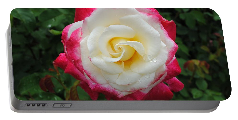 White Portable Battery Charger featuring the photograph White Red Rose by Jost Houk