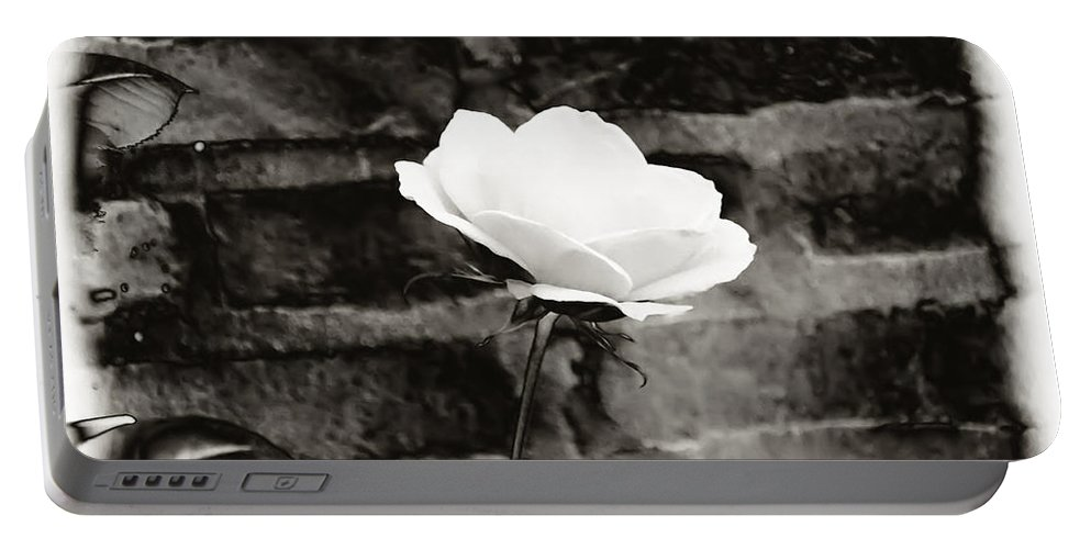 Brick Wall Portable Battery Charger featuring the photograph White Rose In Black And White by Bill Cannon