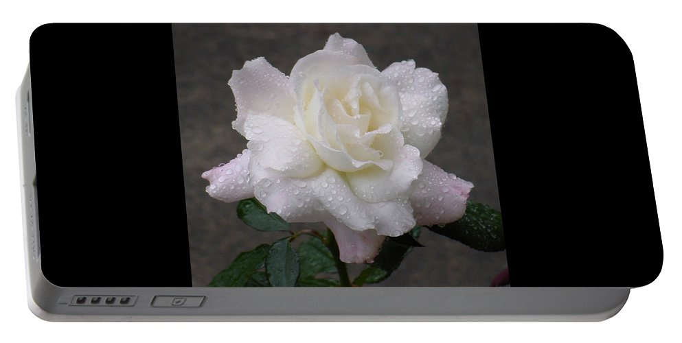 White Portable Battery Charger featuring the photograph White Rose In Rain - 3 by Shirley Heyn