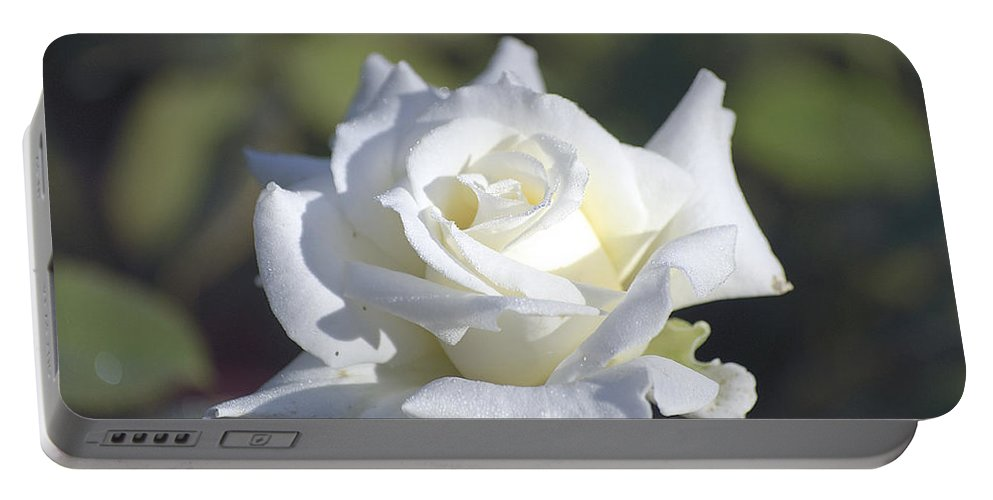 Rose Portable Battery Charger featuring the photograph White Rose by Kenneth Albin