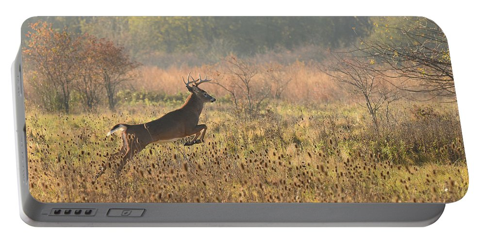 Deer Portable Battery Charger featuring the photograph White Tail Morning by Charles Owens