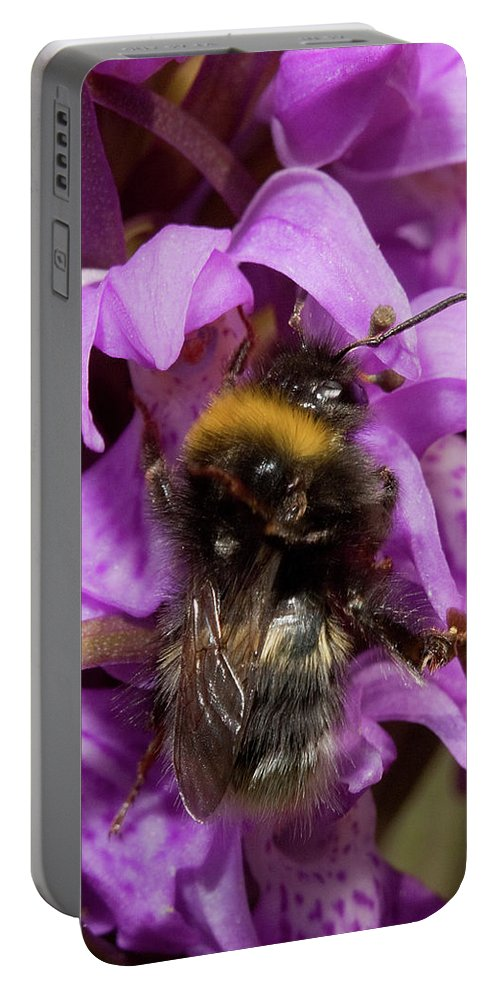 Bumblebee Portable Battery Charger featuring the photograph White-tailed Bumblebee On Southern Marsh Orchid by Bob Kemp