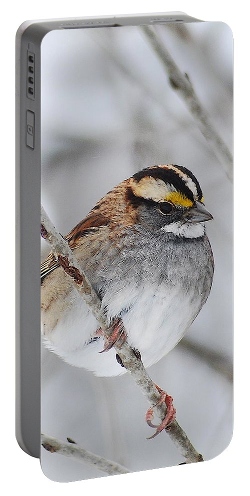 White-throated Sparrow Portable Battery Charger featuring the photograph White Throated Sparrow by Michael Peychich