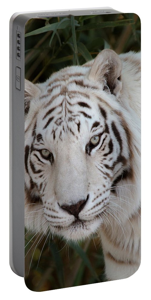 Animal Portable Battery Charger featuring the photograph White Tiger Portrait by Teresa Wilson