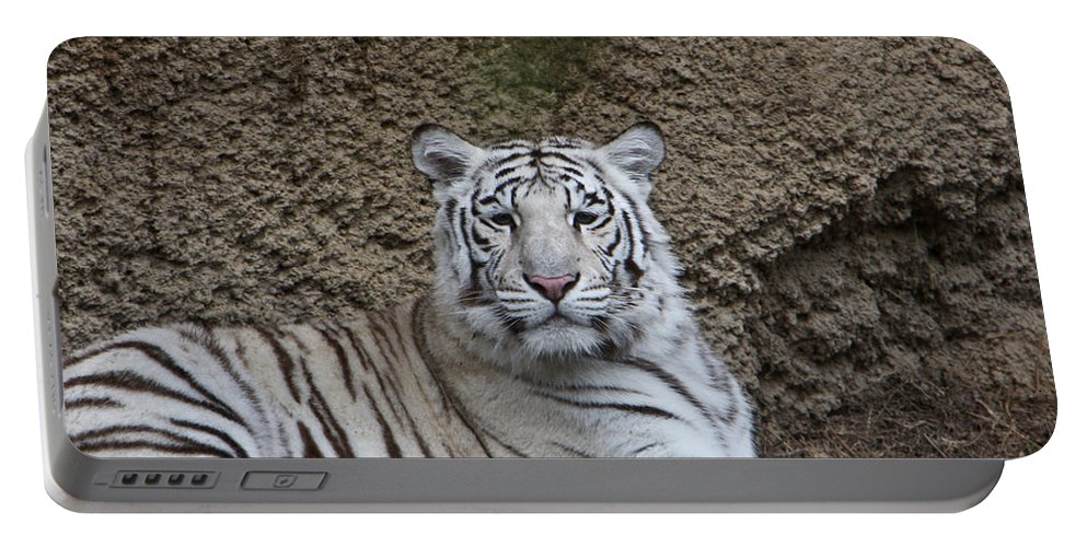 White Portable Battery Charger featuring the photograph White Tiger Resting by Douglas Barnett
