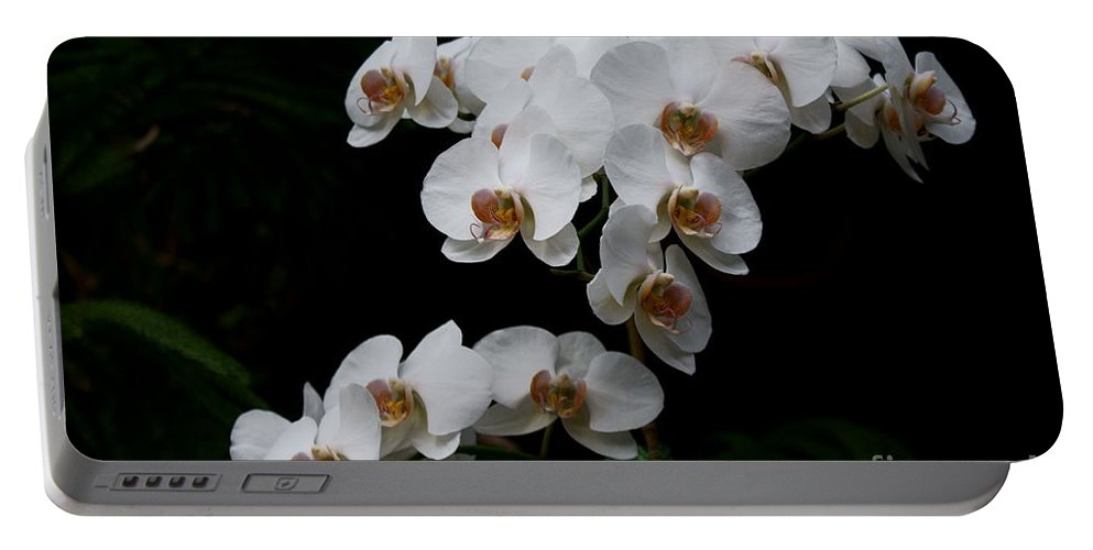 Phylanopsis Orchid Portable Battery Charger featuring the photograph White Velvet by Joanne Smoley