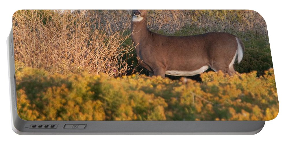 Deer Portable Battery Charger featuring the photograph Whitetail Doe by Steven Natanson