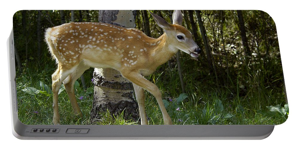 Fawn Portable Battery Charger featuring the photograph Whitetail Fawn by Gary Beeler