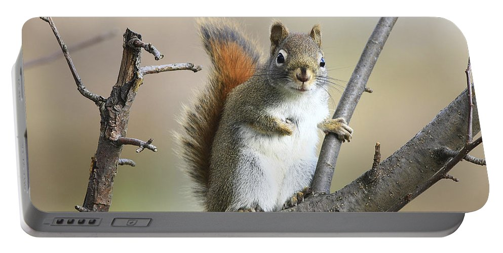 Squirrel Portable Battery Charger featuring the photograph Who Me by Deborah Benoit