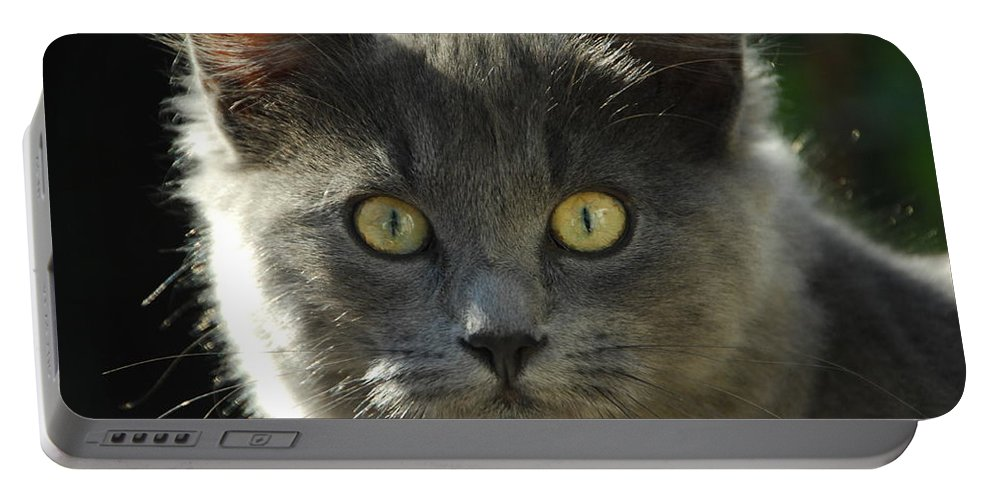 Cat Portable Battery Charger featuring the photograph Who Me by Donna Blackhall