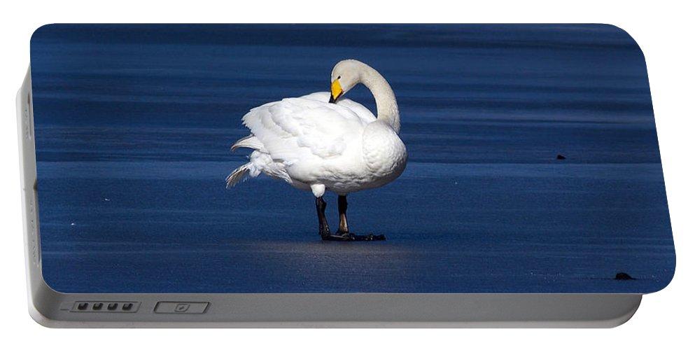 Lehtokukka Portable Battery Charger featuring the photograph Whooper Swan 2 by Jouko Lehto