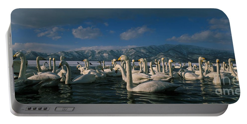 Whooper Swan Portable Battery Charger featuring the photograph Whooper Swans In Winter by Jean-Louis Klein & Marie-Luce Hubert