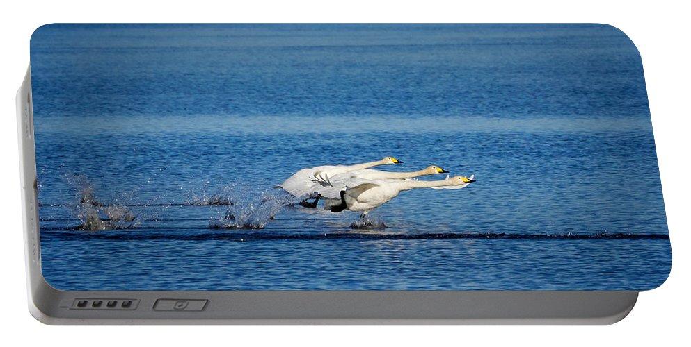 Jouko Lehto Portable Battery Charger featuring the photograph Whooper Swans Trio by Jouko Lehto