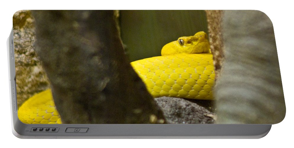 Yellow Portable Battery Charger featuring the photograph Wicked Snake by Douglas Barnett