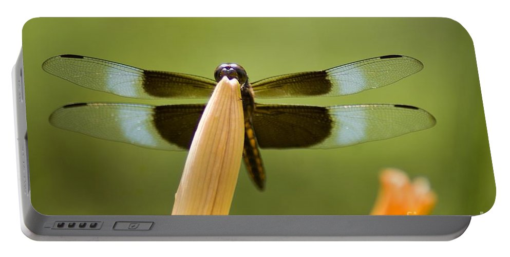 Insect Portable Battery Charger featuring the photograph Widow Skimmer by Ralf Broskvar