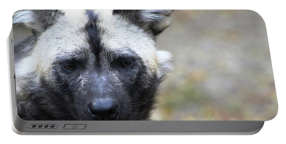 Portable Battery Charger featuring the photograph Wild Dog by Rocky Washington