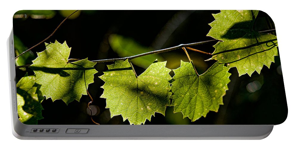 Grape Portable Battery Charger featuring the photograph Wild Grape Leaves by Christopher Holmes