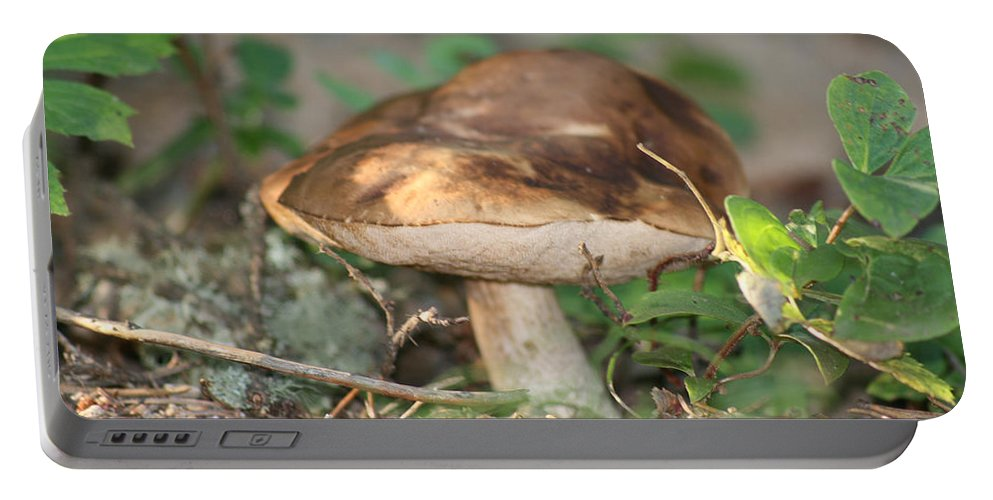 Mushroom Wild Plants Nature Forest Earth Natural Portable Battery Charger featuring the photograph Wild Mushroom by Andrea Lawrence