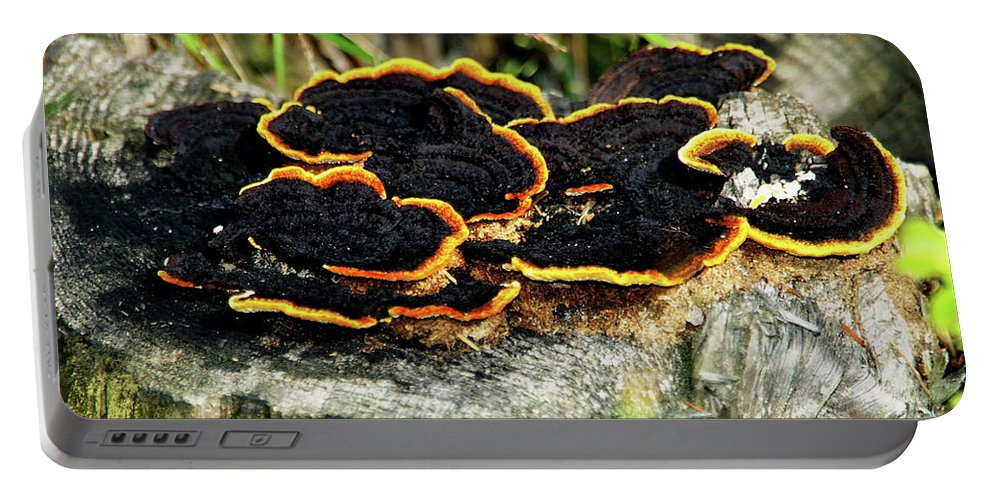 Wild Mushrooms Growing On Tree Trunk Portable Battery Charger featuring the photograph Wild Mushrooms Growing On Tree Trunk by Mariola Bitner