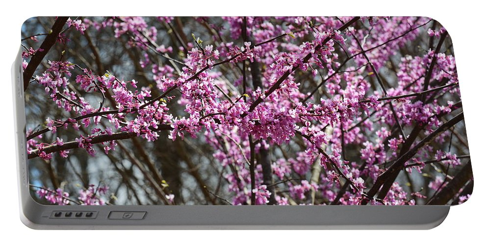 Wild Redbuds Portable Battery Charger featuring the photograph Wild Redbuds by Maria Urso