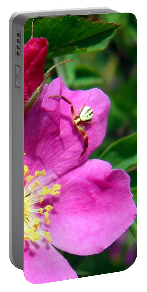 Spider Portable Battery Charger featuring the photograph Wild Rose And The Spider by Will Borden