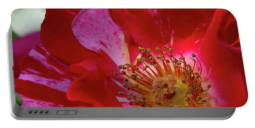 Rose Portable Battery Charger featuring the photograph Wild Rose by Phyllis Denton