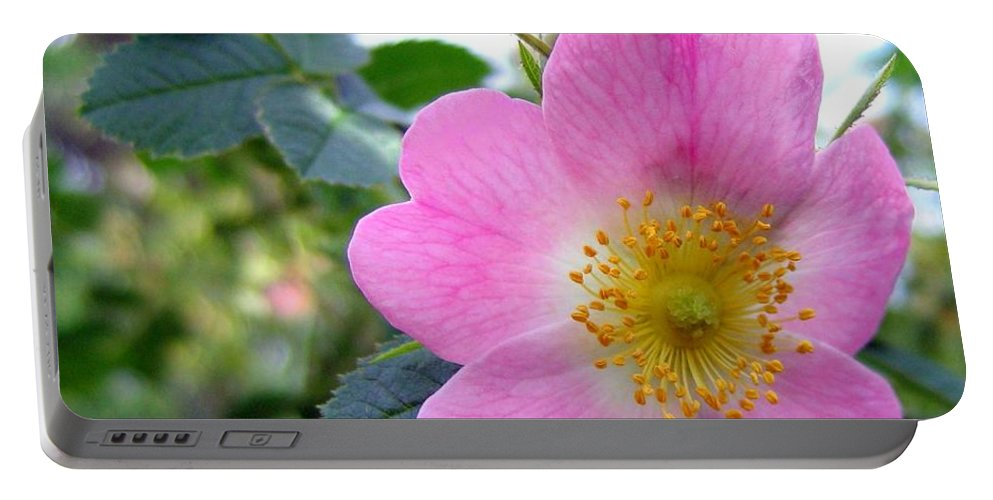 Wild Roses Portable Battery Charger featuring the photograph Wild Roses 2 by Will Borden