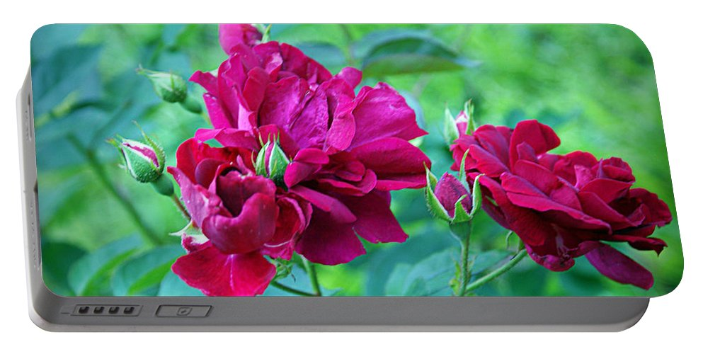 Rose Portable Battery Charger featuring the photograph Wild Roses by Cricket Hackmann