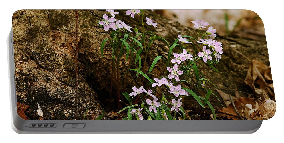 Spring Portable Battery Charger featuring the photograph Wild Spring Beauty by Michael Peychich