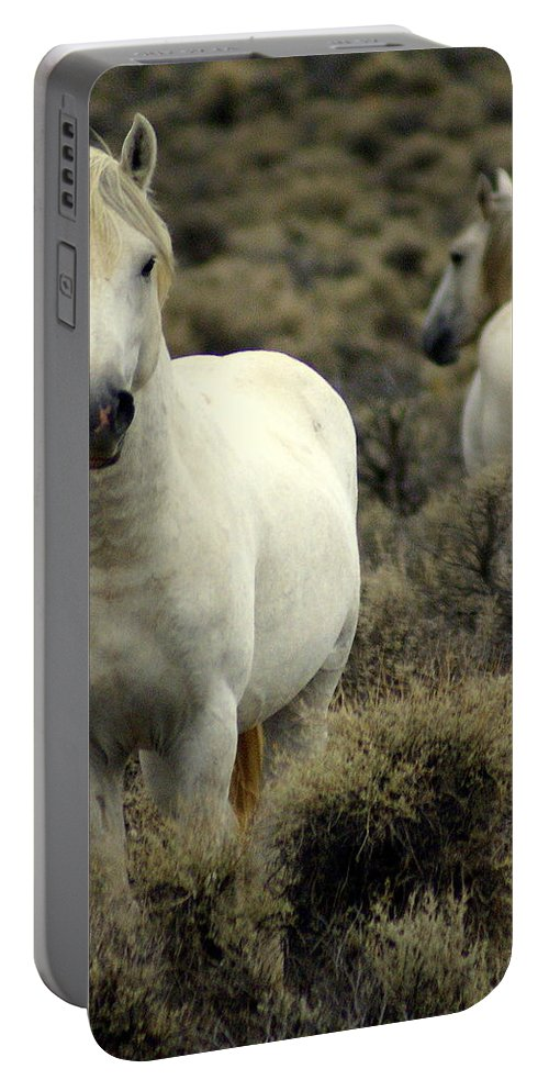 Wild Horses Portable Battery Charger featuring the photograph Wild Stallion by Marty Koch