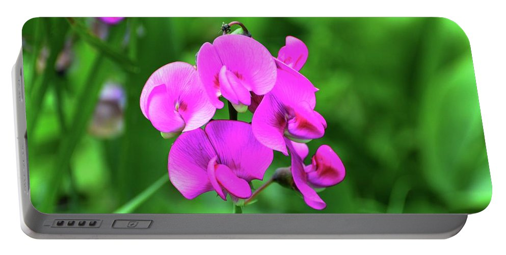 Nature Portable Battery Charger featuring the photograph Wild Sweet Pea by Lyle Crump