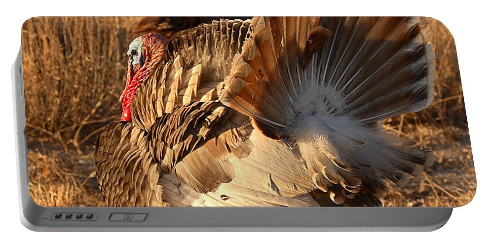 Turkey Portable Battery Charger featuring the photograph Wild Turkey Tom Following Hens by Max Allen