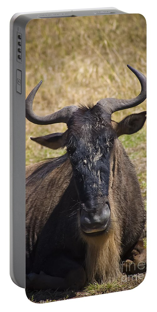 Africa Portable Battery Charger featuring the photograph Wildebeest Taking A Break by Darcy Michaelchuk