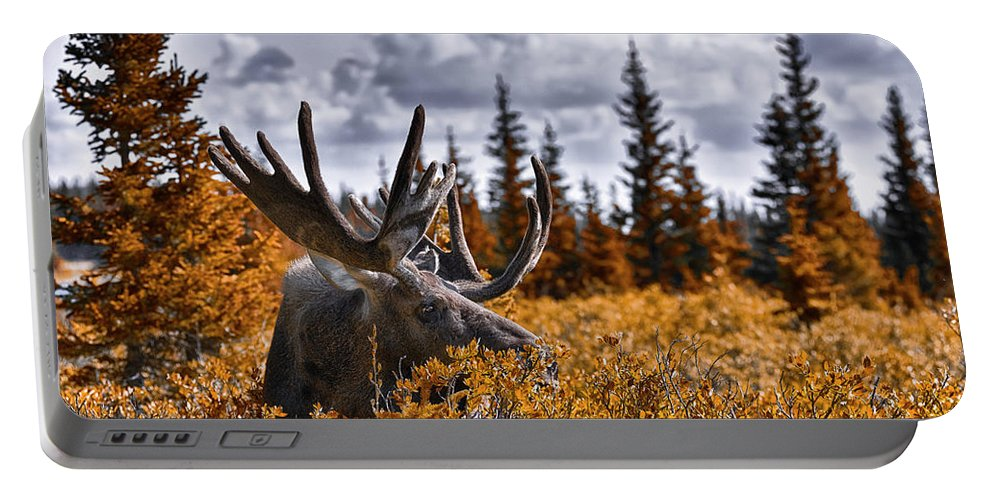 Wilderness Portable Battery Charger featuring the photograph Wilderness by Garett Gabriel