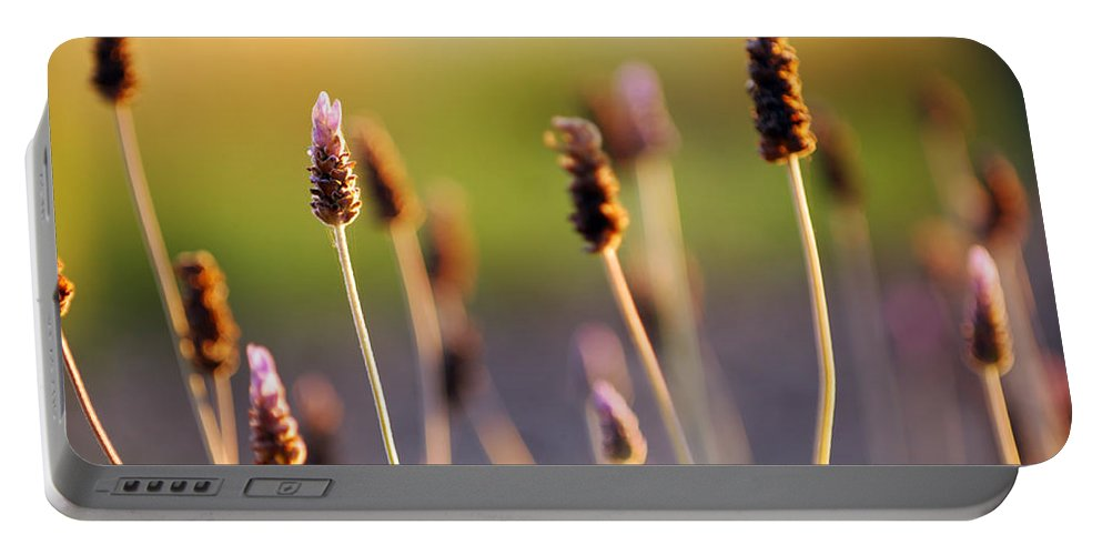 Nature Portable Battery Charger featuring the photograph Wildflower 2 by Jill Reger