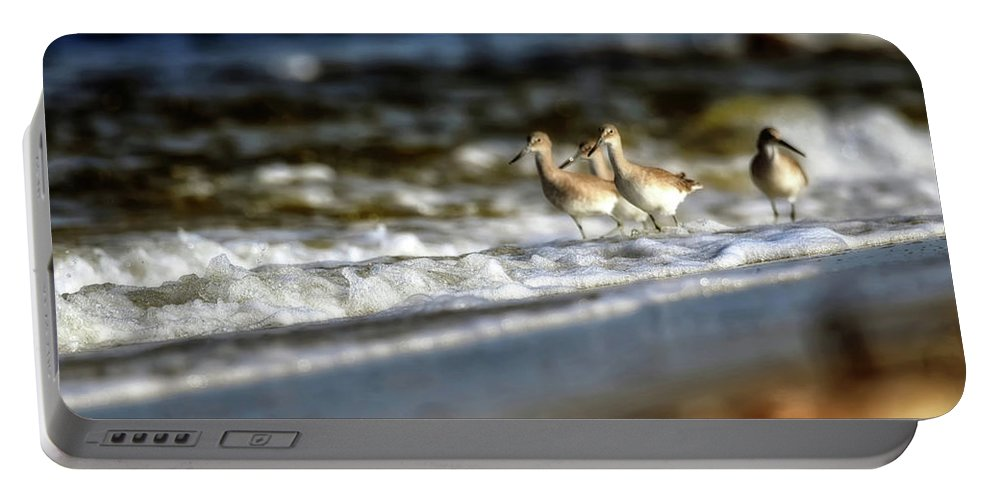 Seascape Portable Battery Charger featuring the photograph Willets In The Waves by Joseph Rainey