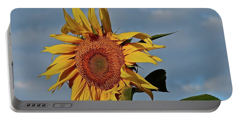 Flower Portable Battery Charger featuring the photograph Windblown by Diana Hatcher