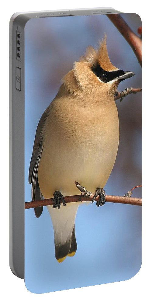 Cedar Waxwing Portable Battery Charger featuring the photograph Windblown Waxwing by Doris Potter