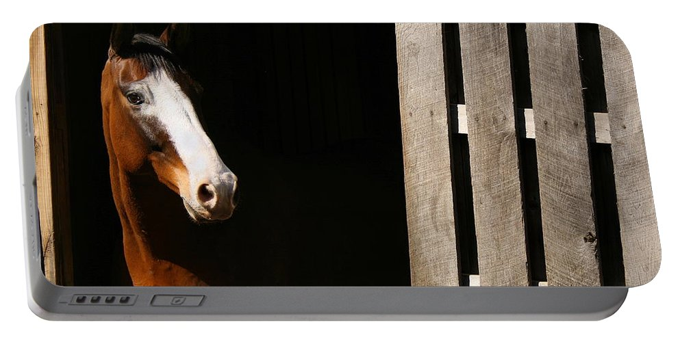 Horse Portable Battery Charger featuring the photograph Window by Angela Rath