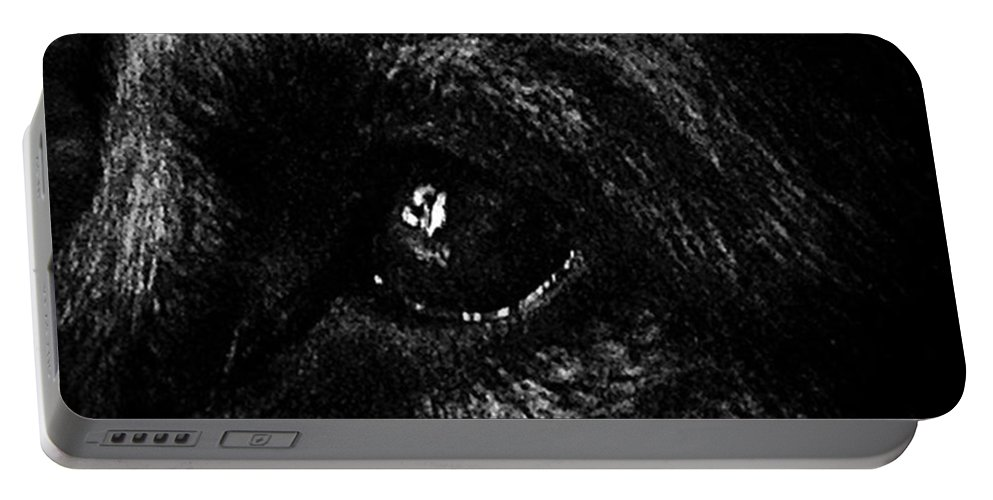 Dog Portable Battery Charger featuring the photograph Window Light Reflection by Frank J Casella