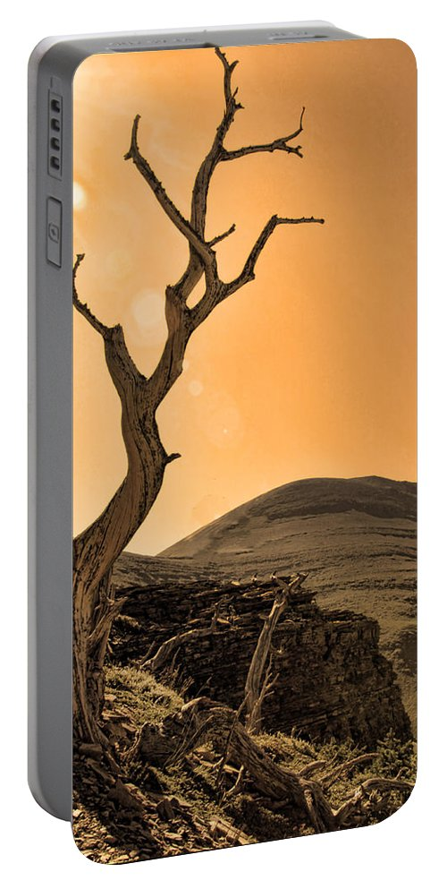 Tree Portable Battery Charger featuring the photograph Windswept by Shari Jardina