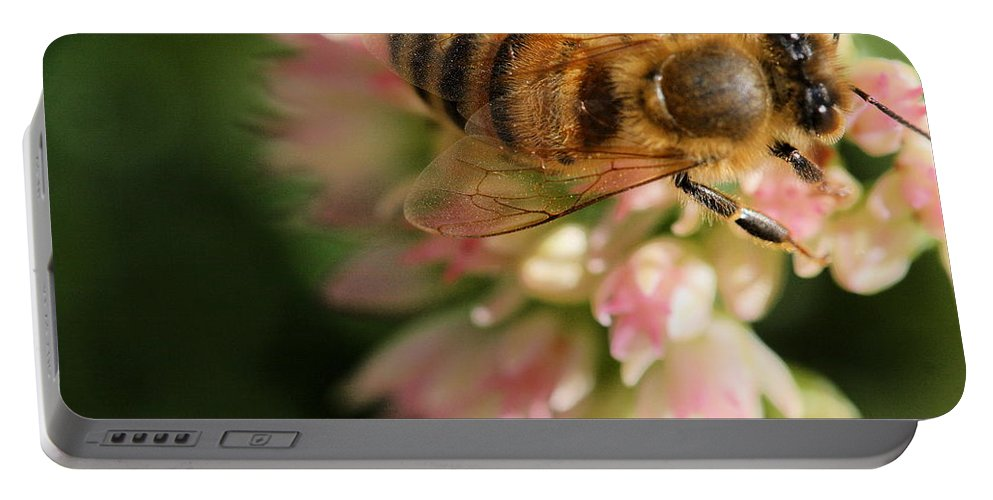 Bee Portable Battery Charger featuring the photograph Wing And A Prayer by Angela Rath
