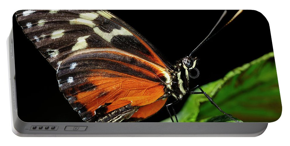 Eueides Isabella Portable Battery Charger featuring the photograph Wing Texture Of Eueides Isabella Longwing Butterfly On A Leaf Ag by Reimar Gaertner